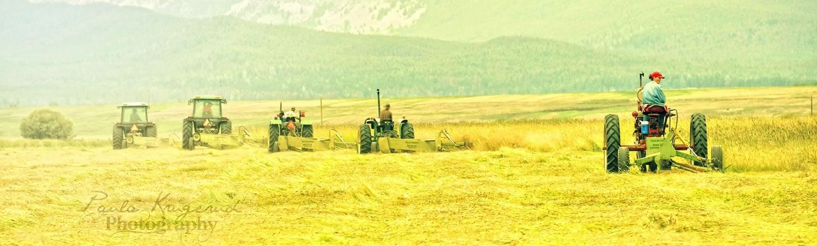 Photo of row of tractors cutting hay.