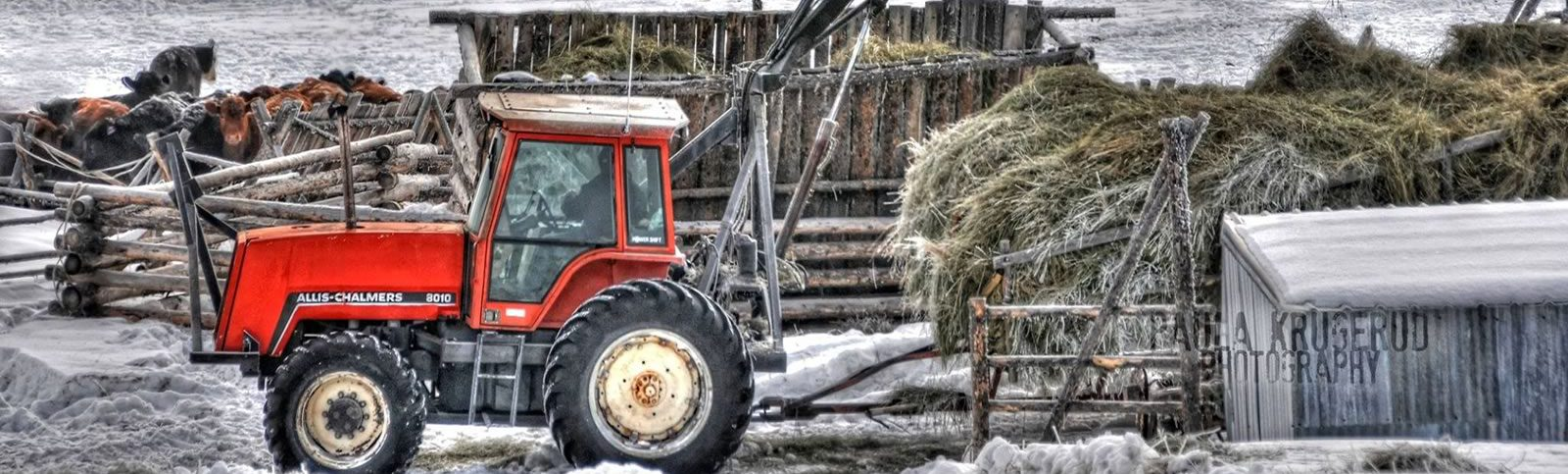 Photo of a tractor pulling a trailer load of hay in the winter.